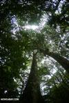 Rainforests [costa_rica_la_selva_1772]