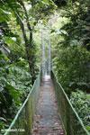 Canopy walkway at Selva Verde