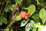 Orange rainforest flower