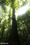 Rainforest [costa_rica_osa_0013]