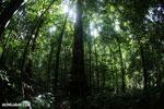 Rainforest [costa_rica_osa_0017]