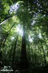 Rainforest [costa_rica_osa_0020]