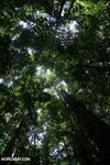 Rainforest [costa_rica_osa_0027]