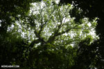 Epiphytes in a rainforest canopy tree