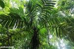 Rainforest [costa_rica_osa_0050]