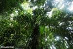 Rainforest [costa_rica_osa_0053]