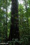 Osa rainforest [costa_rica_osa_0083]