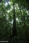 Osa rainforest [costa_rica_osa_0084]