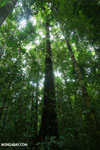 Osa rainforest [costa_rica_osa_0085]