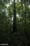 Osa rainforest [costa_rica_osa_0086]