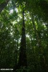 Osa rainforest
