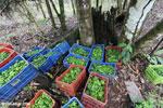 Reforestation project on the Osa Peninsula [costa_rica_osa_0117]