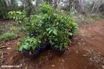 Reforestation project on the Osa Peninsula [costa_rica_osa_0120]