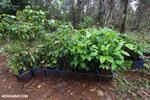 Reforestation project on the Osa Peninsula [costa_rica_osa_0122]