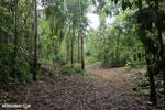 Trail to Greg Gund Conservation Center