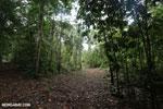Trail to Greg Gund Conservation Center [costa_rica_osa_0126]