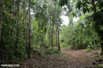 Trail to Greg Gund Conservation Center [costa_rica_osa_0127]