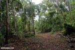Trail to Greg Gund Conservation Center [costa_rica_osa_0128]