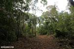 Trail to Greg Gund Conservation Center [costa_rica_osa_0129]