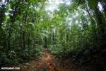 Rainforest trail [costa_rica_osa_0154]