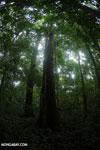 Rainforests [costa_rica_osa_0158]