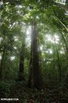 Rainforests [costa_rica_osa_0159]