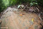 Rainforest seed [costa_rica_osa_0163]