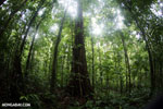 Costa Rican rainforest [costa_rica_osa_0235]