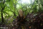 Rainforest fern [costa_rica_osa_0255]