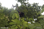 Mantled Howler Monkey [costa_rica_osa_0367]