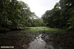 Freshwater swamp in Costa Rica [costa_rica_osa_0374]