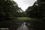 Freshwater swamp in Costa Rica [costa_rica_osa_0375]