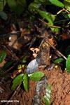 Mushrooms [costa_rica_osa_0384]