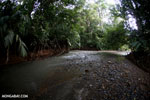 Rainforest creek on the Osa Peninsula [costa_rica_osa_0394]