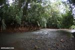 Rainforest creek on the Osa Peninsula [costa_rica_osa_0397]
