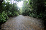 Rainforest creek on the Osa Peninsula [costa_rica_osa_0421]