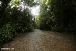 Rainforest creek on the Osa Peninsula [costa_rica_osa_0423]