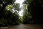 Rainforest creek on the Osa Peninsula [costa_rica_osa_0425]