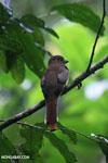 Bird [costa_rica_osa_0675]