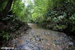 Rainforest creek on the Osa Peninsula [costa_rica_osa_0783]