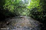 Rainforest creek on the Osa Peninsula [costa_rica_osa_0786]