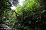 Rainforest creek on the Osa Peninsula [costa_rica_osa_0790]