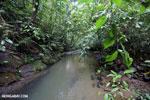 Rainforest creek on the Osa Peninsula [costa_rica_osa_0793]