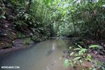 Rainforest creek on the Osa Peninsula [costa_rica_osa_0795]