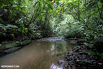 Rainforest creek on the Osa Peninsula [costa_rica_osa_0797]