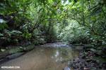 Rainforest creek on the Osa Peninsula [costa_rica_osa_0798]