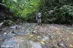 Rainforest creek on the Osa Peninsula [costa_rica_osa_0799]