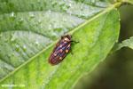 Bug [costa_rica_siquirres_0067]