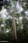 Siquirres rainforest [costa_rica_siquirres_0101]
