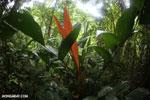 Siquirres rainforest [costa_rica_siquirres_0105]